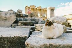 Gato do deus em uma ruína fotografia de stock royalty free