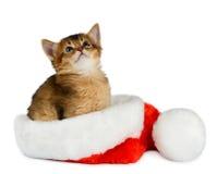 Gato do Feliz Natal com o chapéu de Santa no branco Imagens de Stock Royalty Free