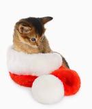 Gato do Feliz Natal com o chapéu de Santa no branco Fotos de Stock