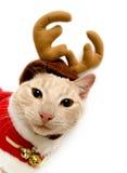 Gato do feriado foto de stock