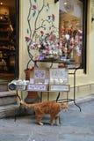 Gato do gengibre na frente da janela da loja Fotografia de Stock