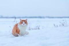 Gato do gengibre no fundo da neve Imagens de Stock