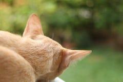Gato do gengibre que dorme, da parte traseira imagem de stock royalty free