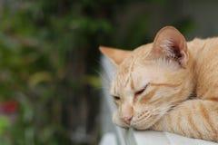 Gato do gengibre que dorme na tabela fotografia de stock royalty free
