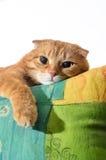 Gato do gengibre que encontra-se nas cadeiras do braço Imagens de Stock