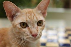 Gato do gengibre que relaxa na grama fotografia de stock royalty free