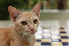Gato do gengibre que relaxa na grama imagem de stock