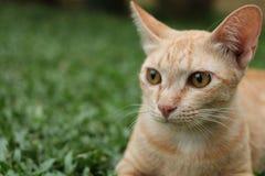 Gato do gengibre que relaxa na grama imagens de stock