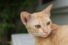 Gato do gengibre que relaxa na grama foto de stock royalty free