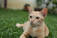 Gato do gengibre que relaxa na grama fotografia de stock