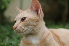 Gato do gengibre que relaxa na grama fotos de stock royalty free