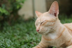 Gato do gengibre que relaxa na grama fotos de stock