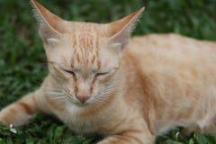 Gato do gengibre que relaxa na grama foto de stock