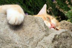 Gato do gengibre sob a influência do catnip Foto de Stock Royalty Free