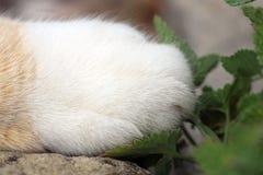 Gato do gengibre sob a influência do catnip Imagem de Stock