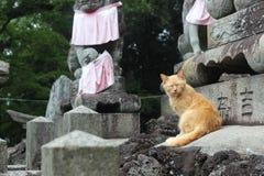 Gato do guardião na parte superior mesma da montanha de Inari, Kyoto, Japão fotos de stock