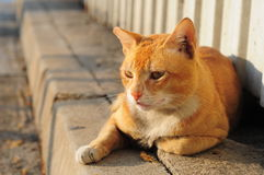 Gato do híbrido Fotos de Stock