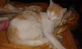 Gato do homem de Beautiflul imagens de stock royalty free