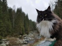 Gato do inverno Imagens de Stock Royalty Free
