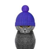 Gato do inverno em um chapéu de lãs Imagens de Stock Royalty Free