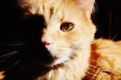 Gato do leão imagem de stock royalty free