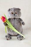 Gato do luxuoso com flor Fotografia de Stock Royalty Free