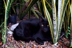 Gato do marrom de Havana no jardim Imagem de Stock Royalty Free
