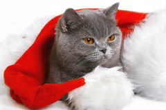 Gato do Natal. Fotografia de Stock Royalty Free