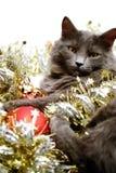 Gato do Natal Fotos de Stock Royalty Free