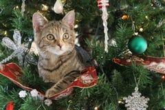 Gato do Natal fotografia de stock royalty free