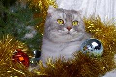 Gato do Natal entre uma pele-árvore Fotos de Stock Royalty Free