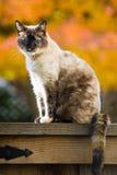 Gato do outono imagens de stock