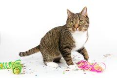 Gato do partido Foto de Stock Royalty Free