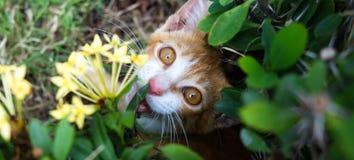 Gato do Peekaboo Fotos de Stock Royalty Free