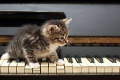Gato do piano Músico, música Foto de Stock