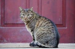 Gato do porteiro Foto de Stock