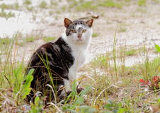 Gato do porto Imagem de Stock Royalty Free