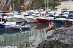 Gato do porto Imagens de Stock Royalty Free