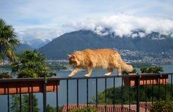 Gato do ` s do amigo Imagem de Stock