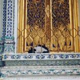 Gato do sono fotografia de stock