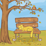 Gato do sono Imagem de Stock Royalty Free