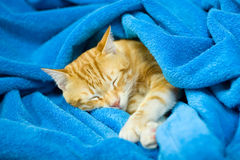 Gato do sono foto de stock royalty free