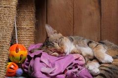 Gato do sono Fotos de Stock