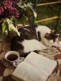 Gato do sono com o lilás aberto do livro no vaso e no copo de chá Foto de Stock Royalty Free