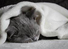 Gato do sono em uma cobertura macia fotos de stock royalty free