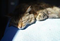 Gato do sono na cama Imagens de Stock