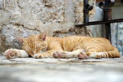 Gato do sono que encontra-se em uma etapa em um templo fotos de stock