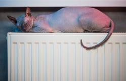 Gato do sono sobre o calefator Imagem de Stock Royalty Free