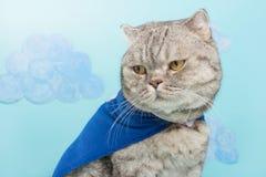 gato do super-herói, Whiskas escocês com um casaco e uma máscara azuis O conceito de um super-herói, gato super, líder foto de stock royalty free