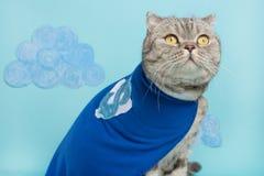 gato do super-herói, Whiskas escocês com um casaco e uma máscara azuis O conceito de um super-herói, gato super, líder imagens de stock
